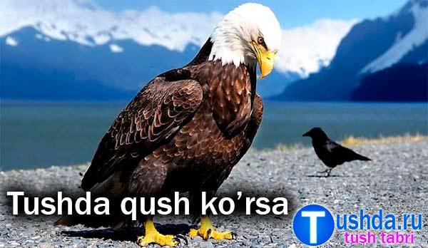 Tushda qush ko'rsa