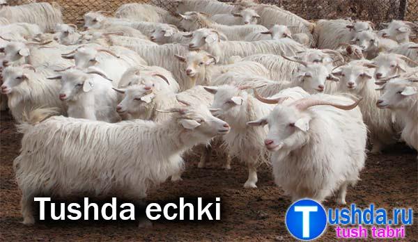 Tushda echki