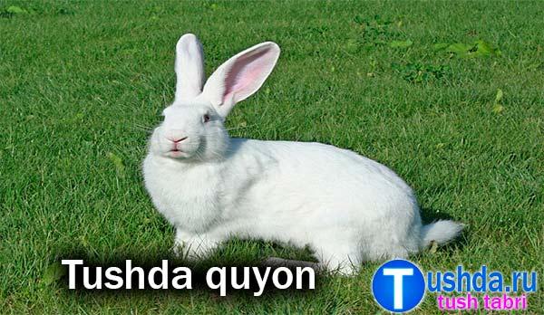 Tushda quyon