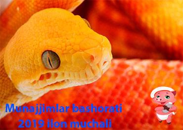 Munajjimlar bashorati 2019 Ilon muchali