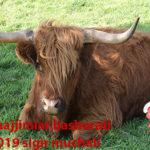 Munajjimlar bashorati 2019 SIGIR muchali