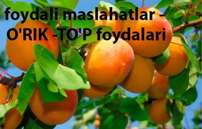 foydali maslahatlar — O'RIK -TO'P foydalari
