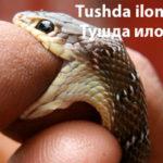 Tushda ilon chaqsa – Тушда илон чақса