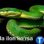 Tushda ilon ko'rsa