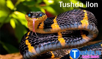 Tushda ilon