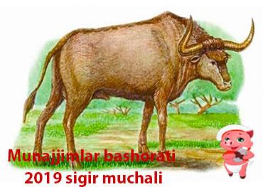 Munajjimlar-bashorati-2019-SIGIR-muchali-haqida