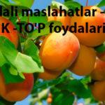 foydali maslahatlar - O'RIK -TO'P foydalari
