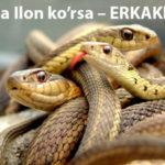 Tushda Ilon ko'rsa – ERKAKlarda
