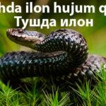 Tushda ilon hujum qilsa - Тушда илон