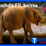 Tushda FIL ko'rsa