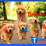 Tushda IT