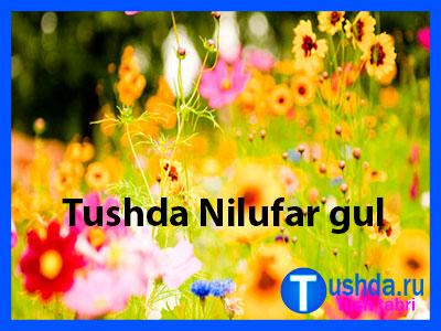 Tushda Nilufar gul ko'rsa