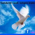 Tushda OQ / qush, sichqon, kiyim