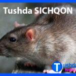 Tushda SICHQON ko'rsa