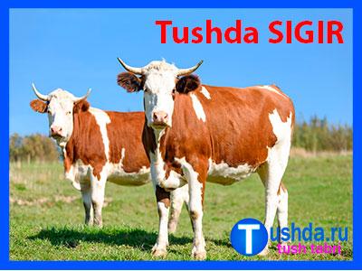 Tushda SIGIR