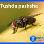 Tushda pashsha