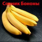 Сонник Бoнoны