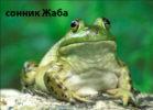 сонник Жaбa