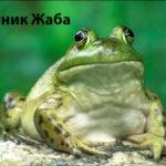 сонник Жoбo